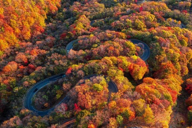 いろは坂の紅葉を空から見た写真